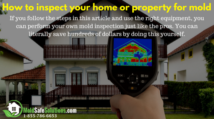 How-to-inspect-your-home-or-property-for-mold